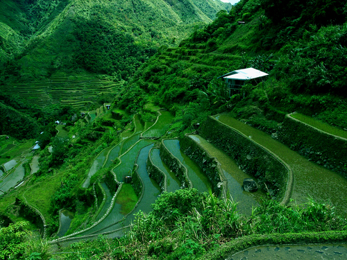 Featured medium photo of Banaue Rice Terraces on TripHappy's travel guide