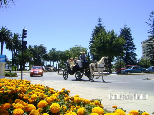 Featured medium photo of Viña del Mar on TripHappy's travel guide