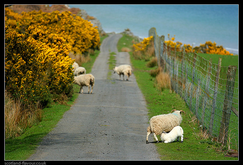 Photo of Islay in the TripHappy travel guide