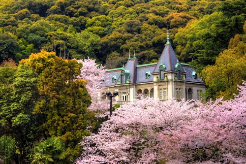 Featured medium photo of Matsuyama on TripHappy's travel guide