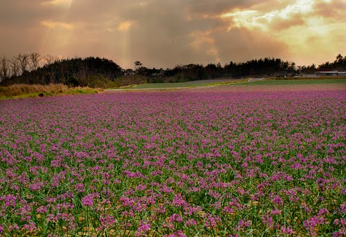Photo of Tottori in the TripHappy travel guide