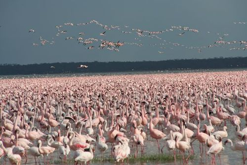 Photo of Nakuru in the TripHappy travel guide