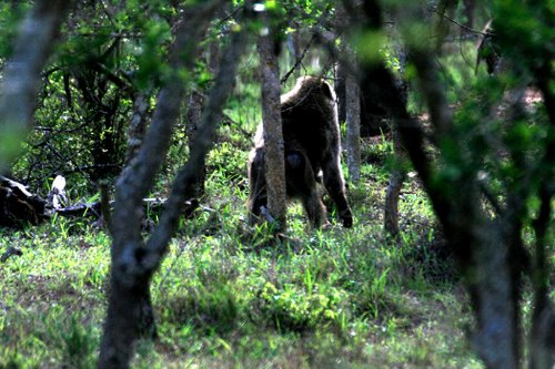 Featured medium photo of Lake Mburo National Park Gate on TripHappy's travel guide