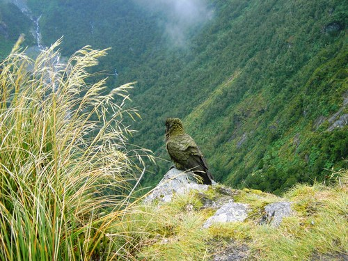 Featured medium photo of Milford Track on TripHappy's travel guide