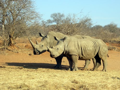 Photo of Kruger National Park in the TripHappy travel guide