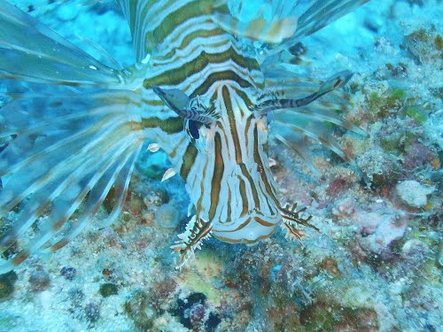 Featured medium photo of Great Barrier Reef on TripHappy's travel guide