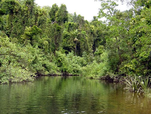 Photo of Daintree in the TripHappy travel guide