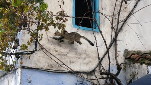 Photo of Chefchaouen in the TripHappy travel guide