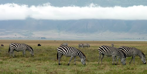 Photo of Ngorongoro Conservation Area in the TripHappy travel guide