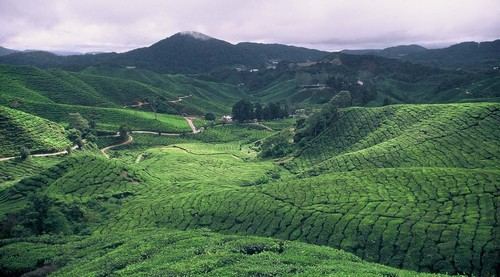 Photo of Tanah Rata in the TripHappy travel guide
