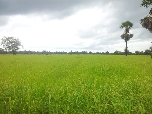 Photo of Kampong Thom in the TripHappy travel guide