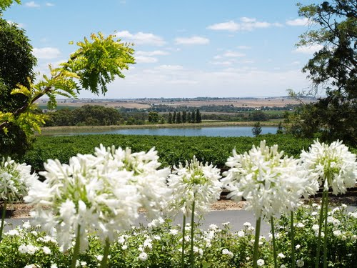 Featured medium photo of Barossa Valley on TripHappy's travel guide