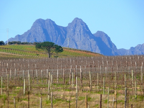 Featured medium photo of Stellenbosch on TripHappy's travel guide