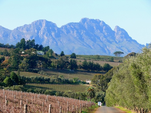 Photo of Stellenbosch in the TripHappy travel guide