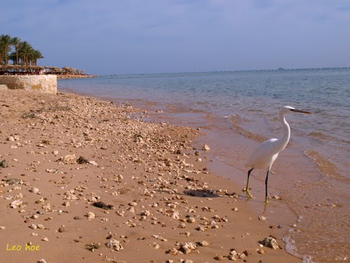 Featured medium photo of Hurghada on TripHappy's travel guide