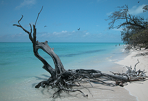 Photo of Heron Island in the TripHappy travel guide