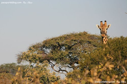 Photo of Makgadikgadi Pans National Park in the TripHappy travel guide