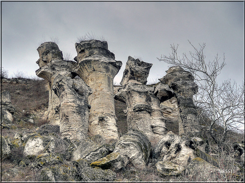 Featured medium photo of The Stone Forest on TripHappy's travel guide