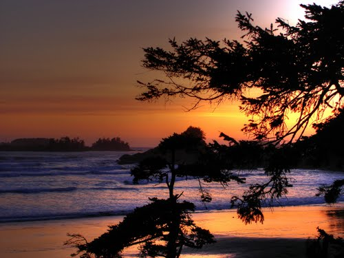 Featured medium photo of Tofino on TripHappy's travel guide
