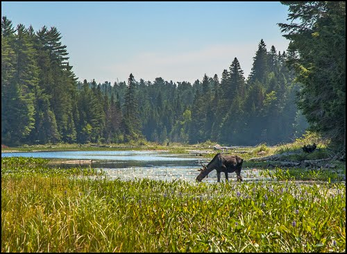 Photo of Algonquin Provincial Park in the TripHappy travel guide