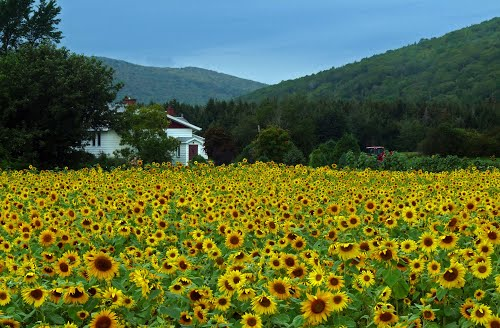 Photo of Margaree Valley in the TripHappy travel guide