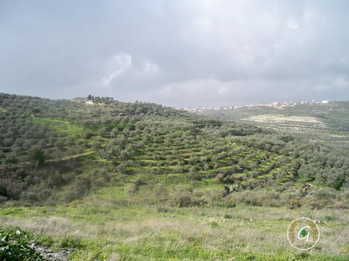 Photo of Koura in the TripHappy travel guide