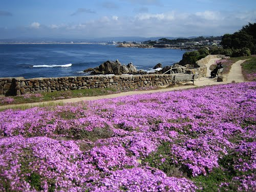 Featured medium photo of Monterey on TripHappy's travel guide
