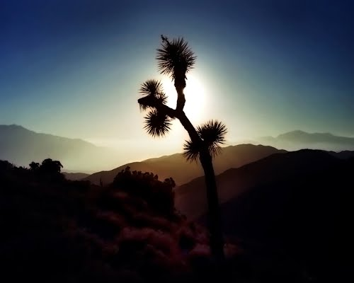 Featured medium photo of Joshua Tree National Park on TripHappy's travel guide