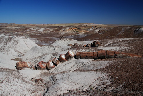 Photo of Petrified Forest National Park in the TripHappy travel guide