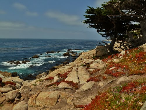 Featured medium photo of Carmel-by-the-Sea on TripHappy's travel guide