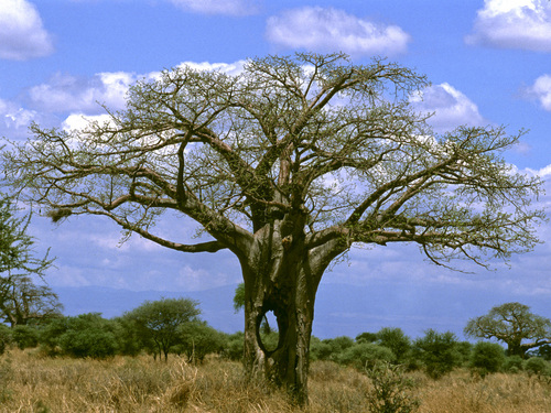 Photo of Tarangire National Park in the TripHappy travel guide