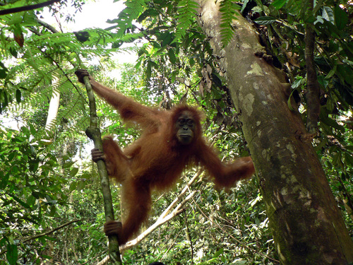 Featured medium photo of Bukit Lawang on TripHappy's travel guide