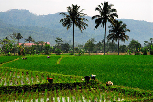 Photo of Cianjur in the TripHappy travel guide