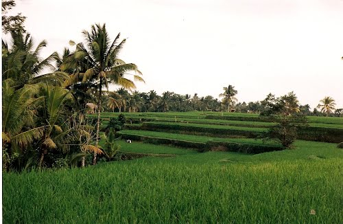 Photo of Pejeng in the TripHappy travel guide