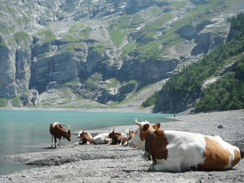 Featured medium photo of Kandersteg on TripHappy's travel guide