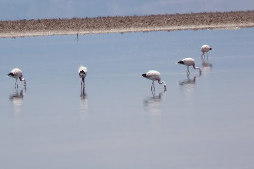 Photo of Salar de Atacama in the TripHappy travel guide