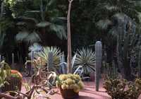 Photo of Majorelle in the TripHappy travel guide
