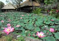 Photo of Ubud City-Centre in the TripHappy travel guide
