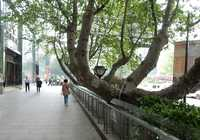 Photo of Xinjiekou in the TripHappy travel guide