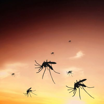 Dengue Fever Advice from our Travel Clinic