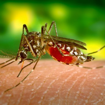 Zika Virus Testing