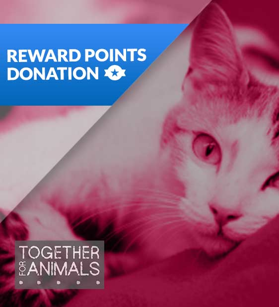 562x619-togetherforanimals