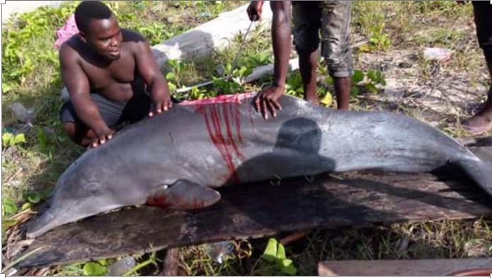 Dolphin killed in Nigeria