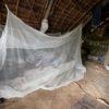 WHO malaria