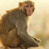 monkey pox