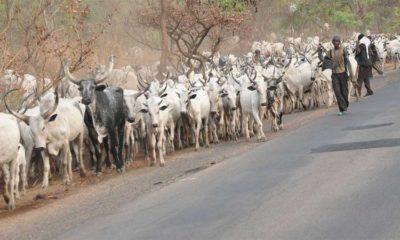MACBAN Fulani Herdsmen