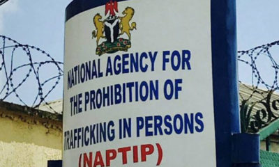 NAPTIP probes 40 rape cases