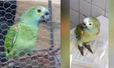 Parrot arrested