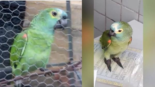 Image result for parrot arrested