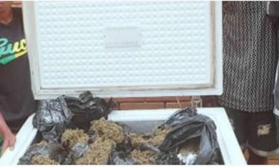 Freezer-load of hemp